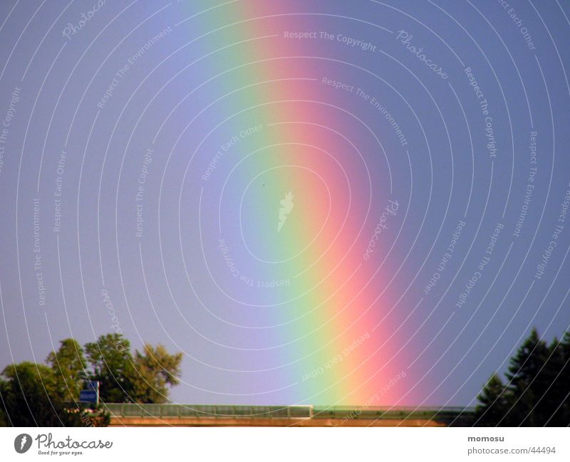 Sky Tree Colour Rainbow Arch Natural phenomenon