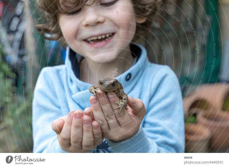 A little boy is happy to have a toad in his hand Cheerful Little boy animal caucasian child concentrated curious earth toad fingers human human child