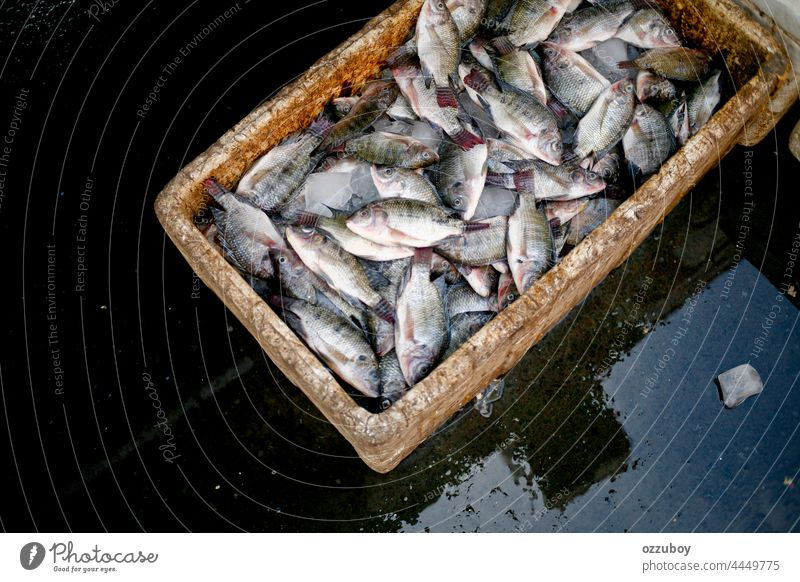 Box full of fresh nile tilapia are on sale in the market fish food seafood freshness fishing ingredient raw animal healthy fin background closeup ice water cold