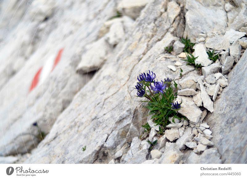 Nature Plant Flower Landscape Mountain Sports Stone Sand Rock Idyll Earth Elements Adventure Peak Gravel Glacier