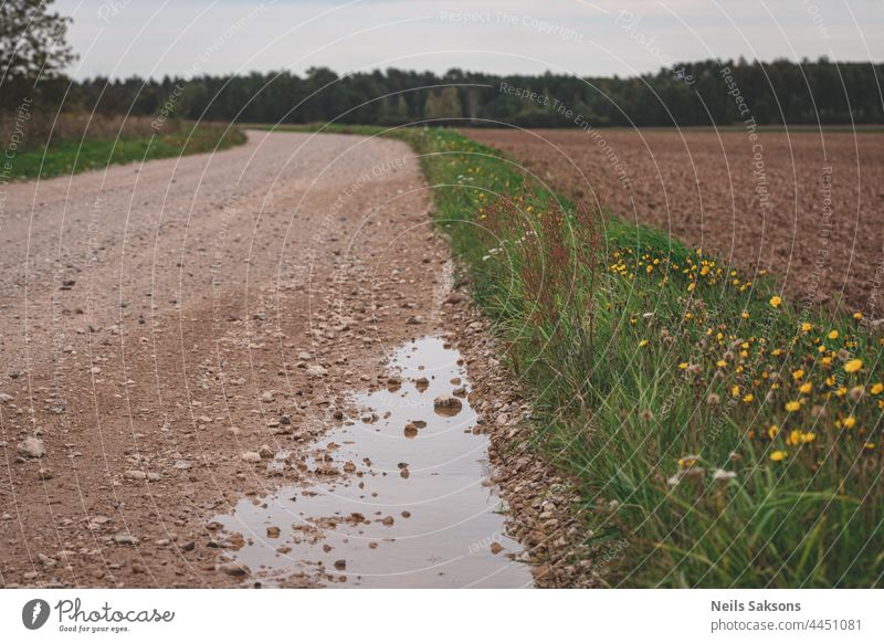 puddle on gravel road, pathway in Latvia countryside leads forward, bending road, yellow flowers on side, agricultural field and forest in distance tracks