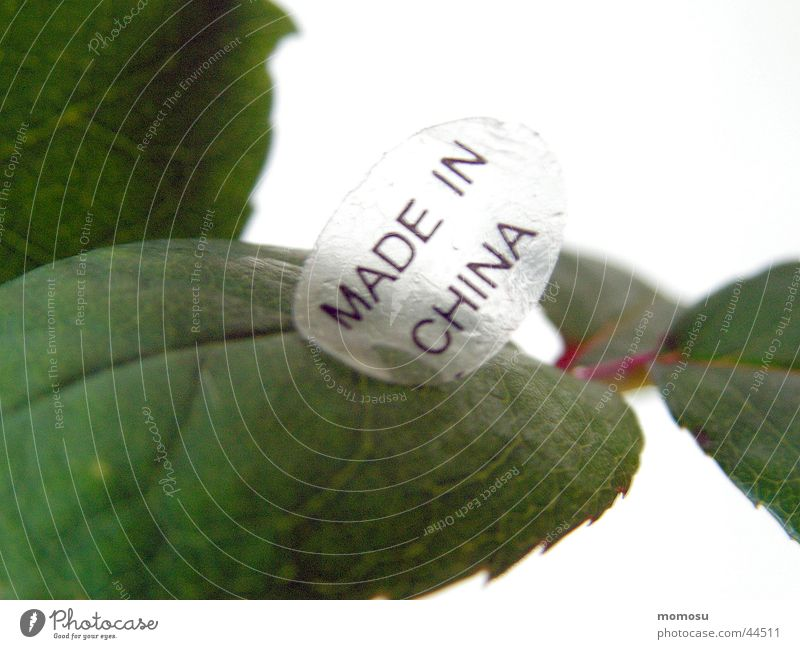 MADE IN CHINA Rose leaves Leaf China Production Foreign countries Obscure maggot