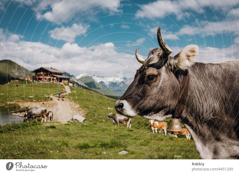 Cow in front of a hut in East Tyrol Alps Eastern Tyrol Hiking Peak vacation mountain Austria hike outlook vantage point Horizon panorama Vacation & Travel