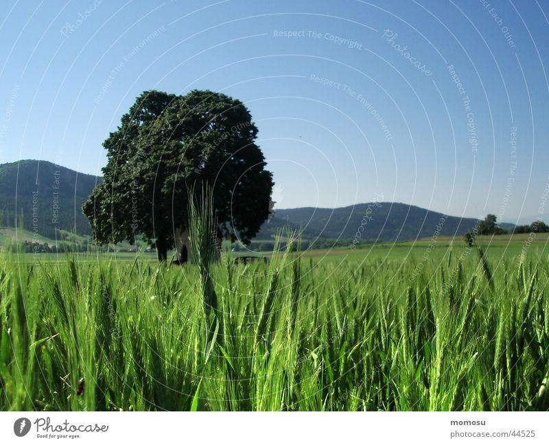 grassland Meadow Grass Hill Green Baun Sky Blue