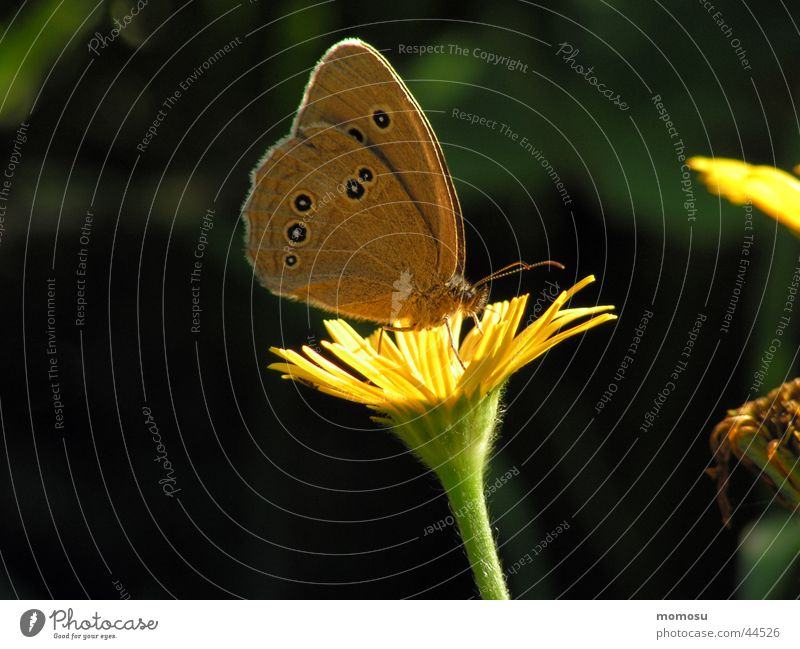 butterfly breakfast Butterfly Flower Meadow Blossom Insect