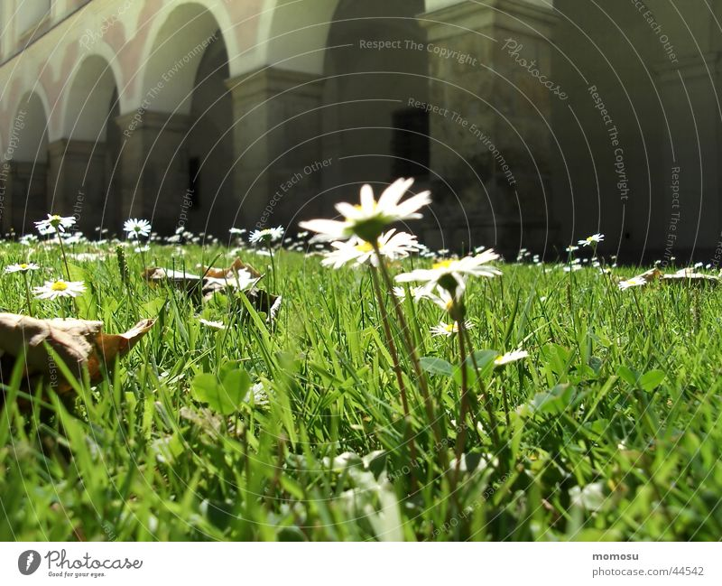 Meadow Grass Daisy Monastery Meadow flower Christian cross Arcade Federal State of Lower Austria Holy cross