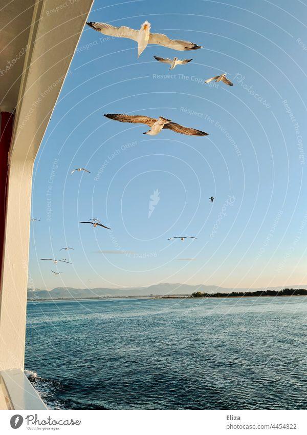 Seagulls fly over the sea Ocean Flying birds Sky Bird Freedom Hotizont Ship railing ship Blue
