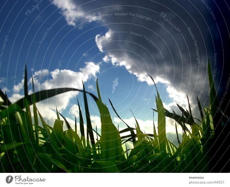 Sky Green Blue Clouds Grass Moody