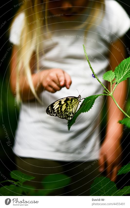 Child points to a butterfly Butterfly Nature explore Fingers Indicate Insect Animal Find inquisitorial Experiencing nature Girl Cute