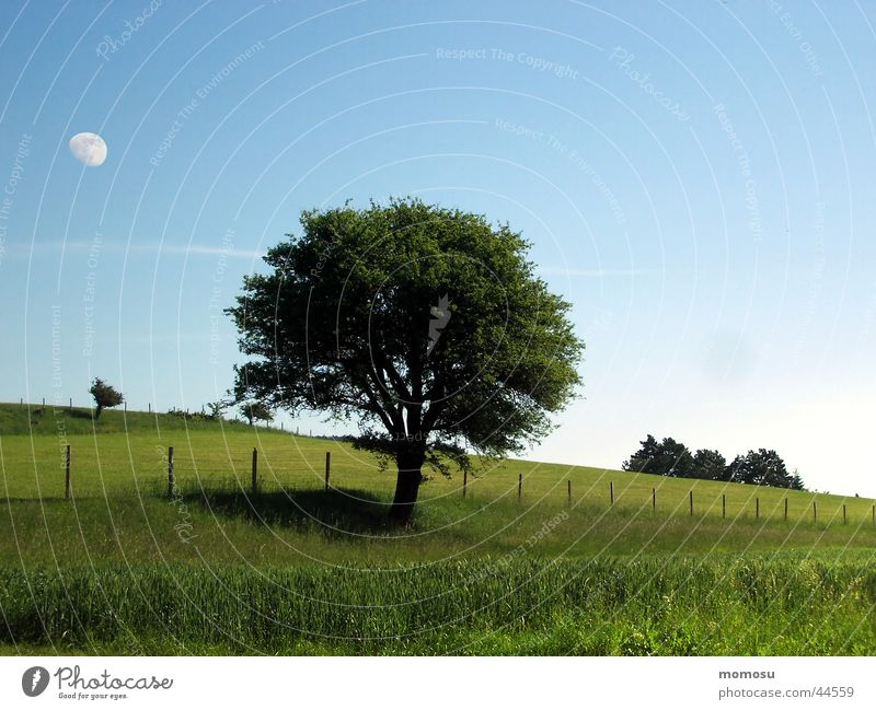Sky Tree Summer Meadow Grass Spring Field Moon Fence
