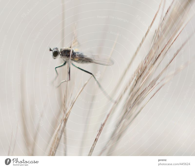insectus kleinus Environment Nature Animal Gray Black Fly Crane fly Insect Colour photo Exterior shot Close-up Macro (Extreme close-up) Copy Space top Day