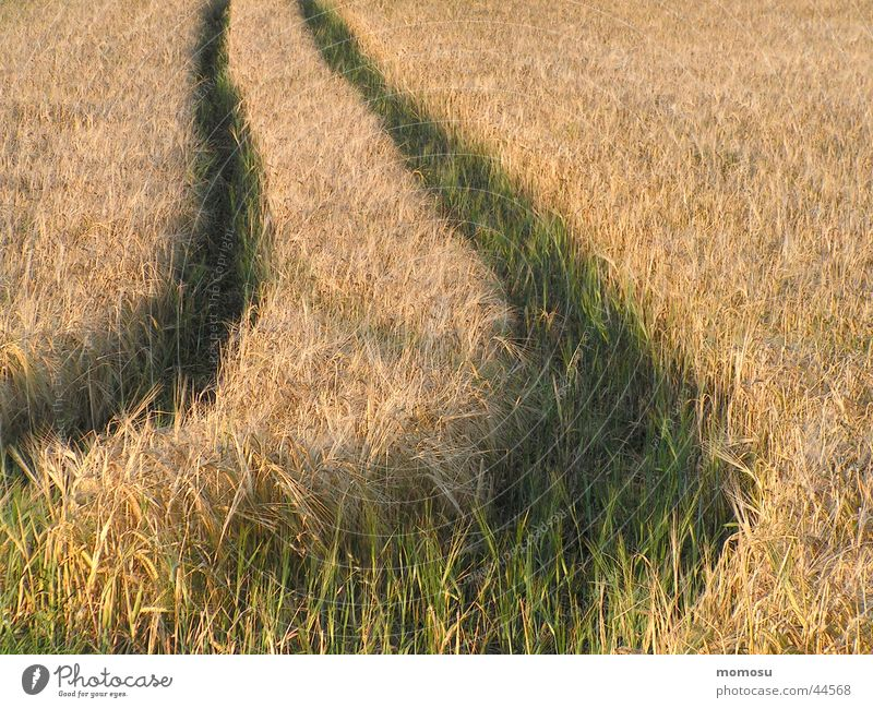 Summer Lanes & trails Line Field Tracks Grain Harvest Curve Bend