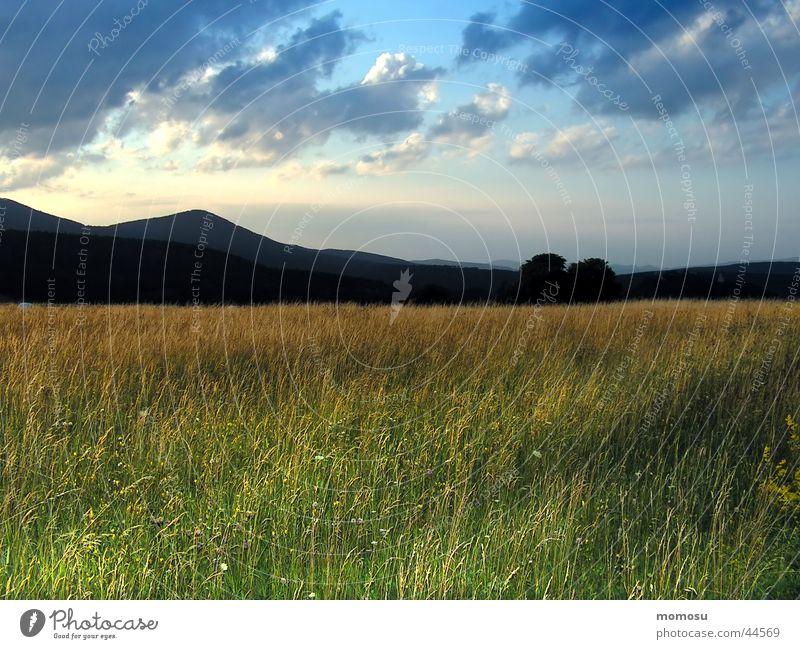 evening light Meadow Grass Clouds Moody Sunset Mountain Sky Evening