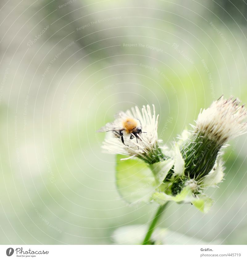 Of bees and flowers Plant Animal Summer Blossom Wild plant Park Wild animal Bee 1 Discover Green Appetite Adventure Idyll Nature Pure Insect Thistle