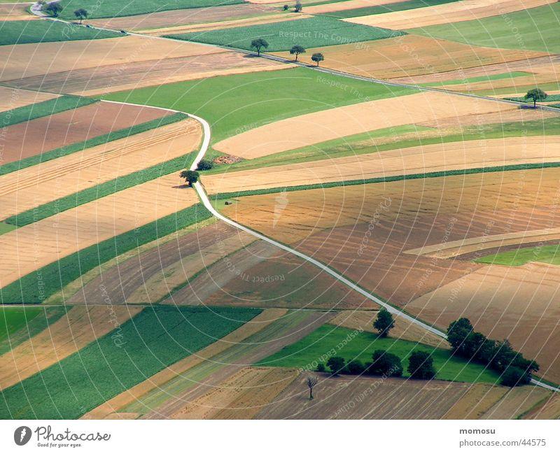 Tree Street Lanes & trails Field Bird's-eye view