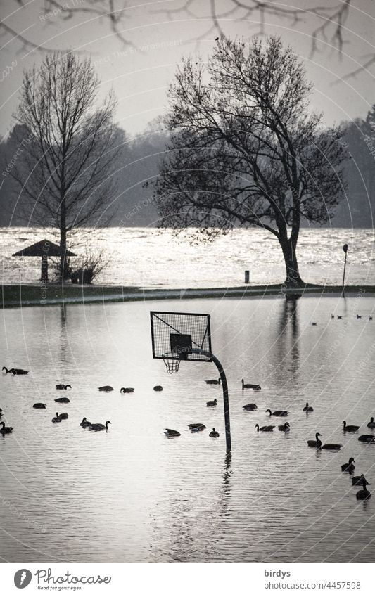 A basketball court flooded by high water on which ducks swim Flood Deluge heavy rain Torrents of water Basketball arena Basketball basket Climate change River
