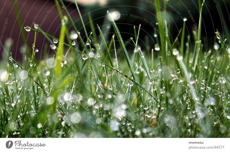 wet as a grass Grass Meadow Wet Green Drops of water Water Rain Rope Blur Garden Lawn
