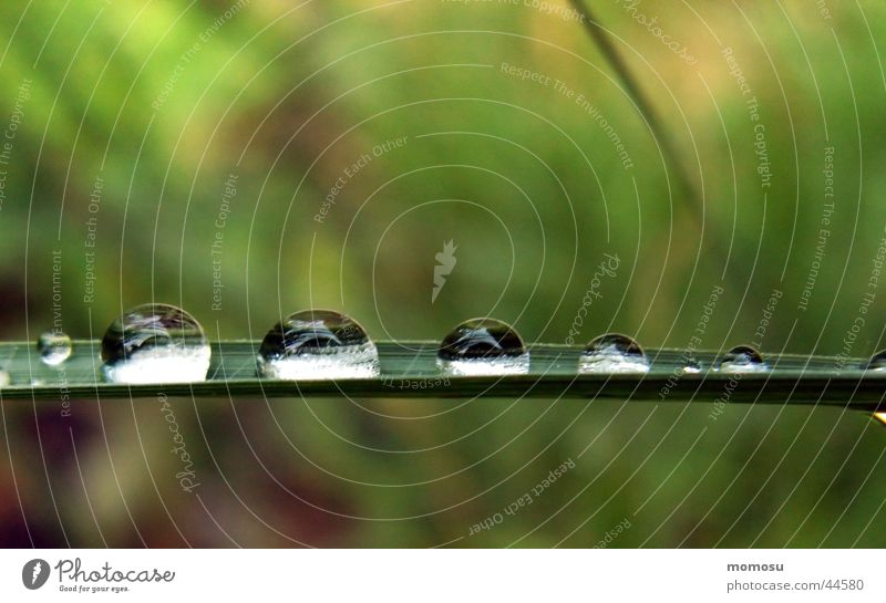 drop gallery Grass Blade of grass Wet Meadow Drops of water Water Rain Sphere