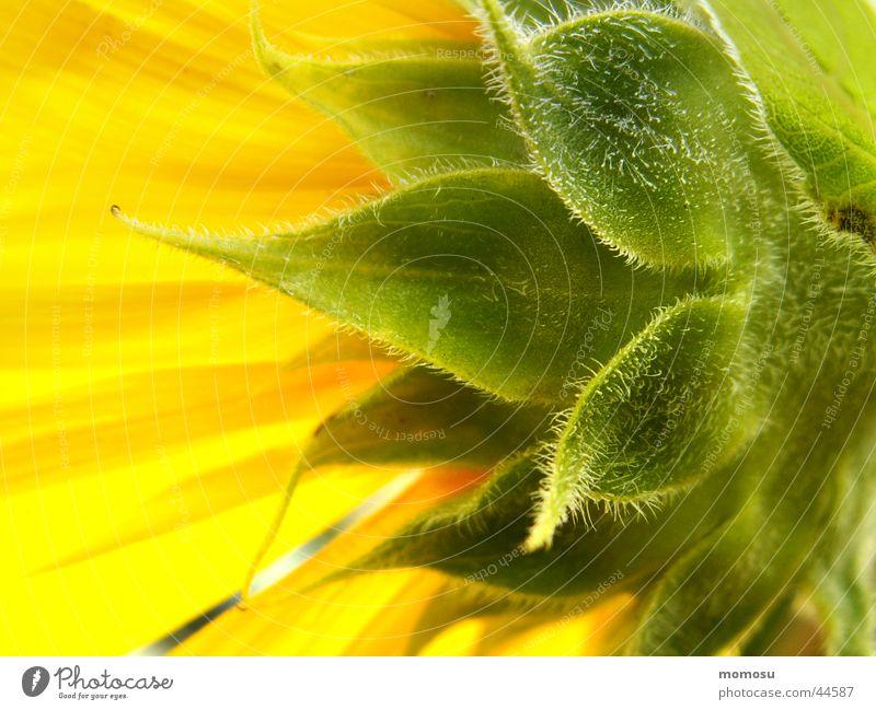 Sun Summer Leaf Yellow Blossom Field