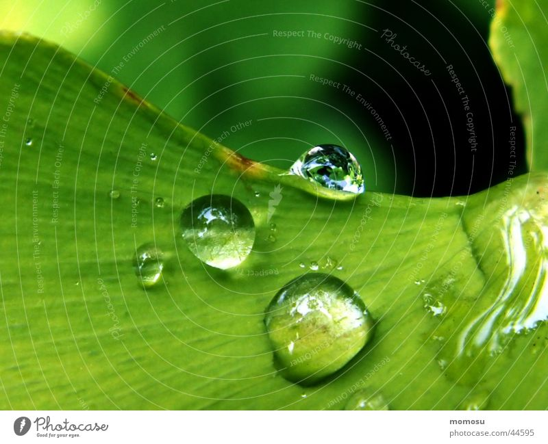 Tree Green Leaf Rain Drops of water