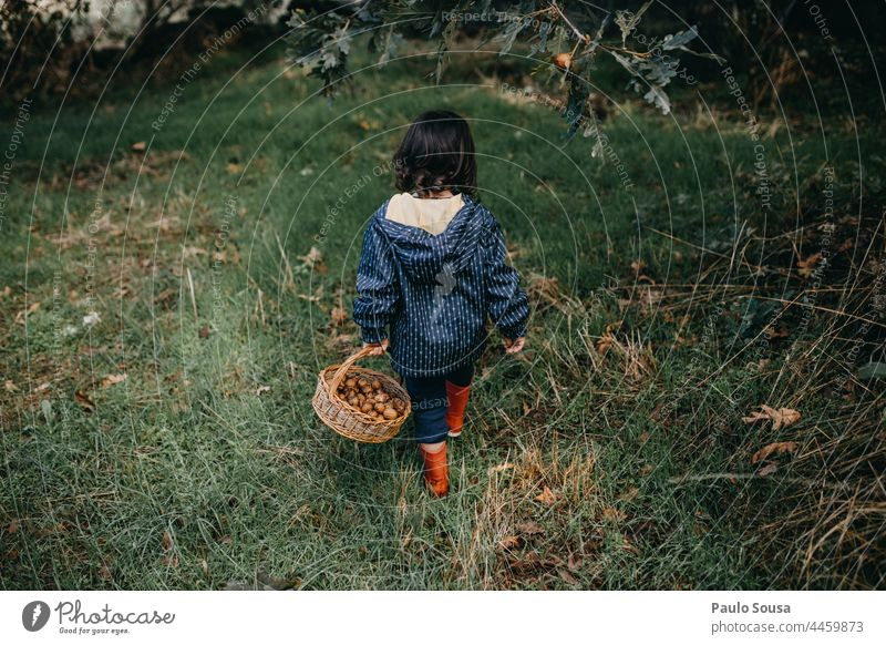 Rear view child walking with basket full of walnuts Child Girl Authentic Autumn Walnut Basket Container Environment Lifestyle Colour photo Green Exterior shot