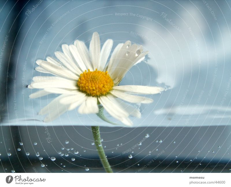 Water Flower Leaf Blossom Blow Daisy Meadow flower