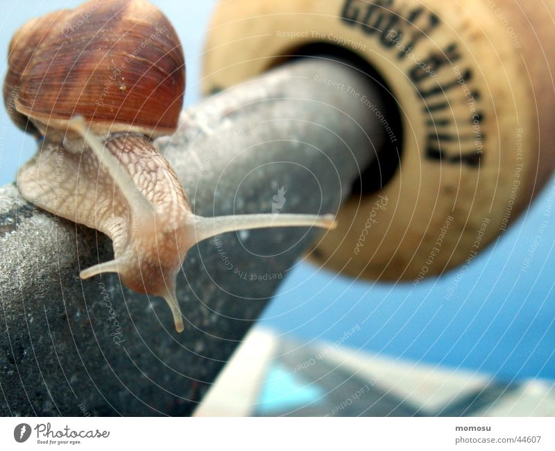 snail on board Leisure and hobbies Snail Detail Macro (Extreme close-up) Axle