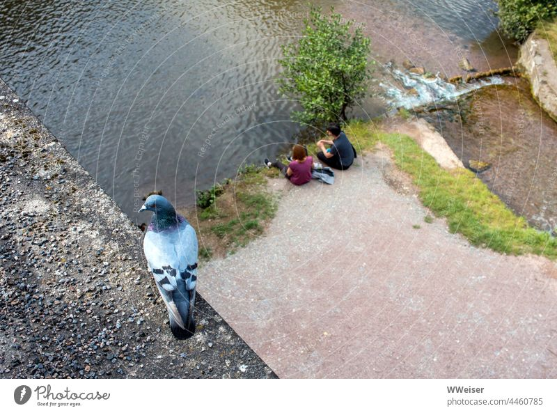 A good place on the bridge: From up here the pigeon can watch the couples on the river Pigeon Water River Flow heightened Above Tall Places Under Green romantic