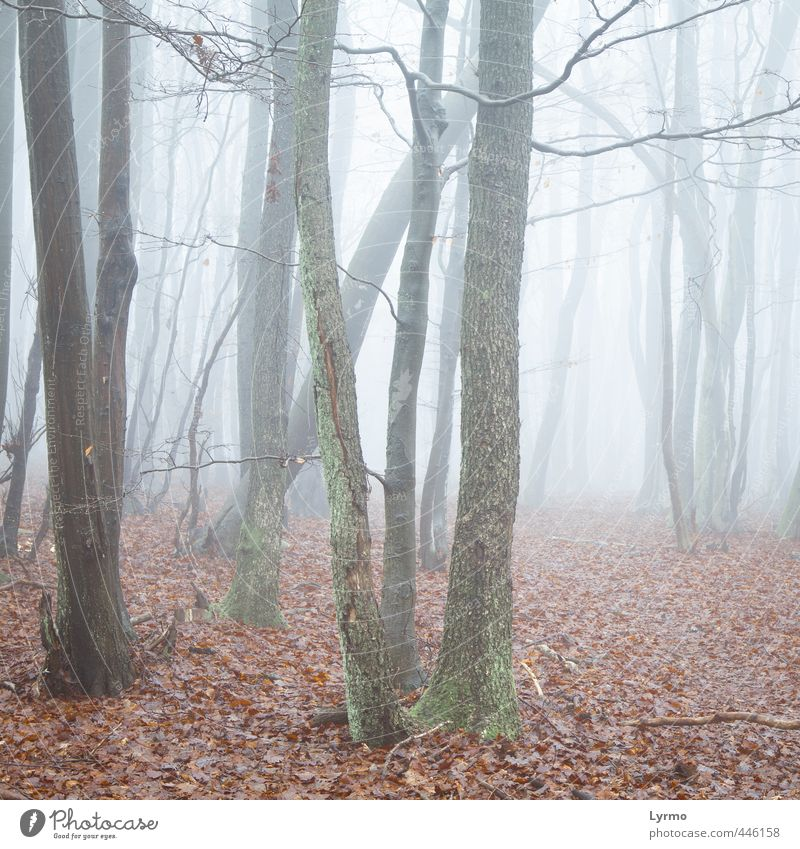 clearing in the fog Nature Landscape Winter Fog Tree Flower Forest Wood Esthetic Together Bright Cold Natural Wild Brown Red Moody Discover Mysterious