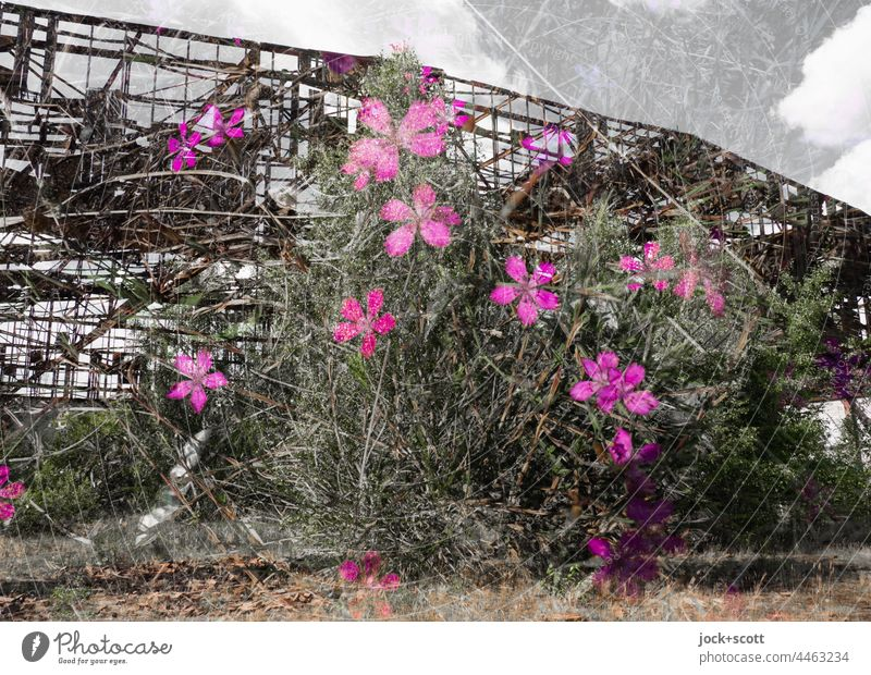 Lost Land Love - the flowers bloom in front of the hangar lost places Double exposure Ruin Hangar Nature renaturation Derelict Blossoming Apocalyptic sentiment