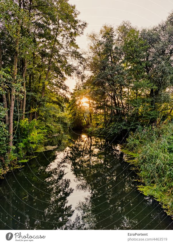 For God's sake. Forest River Sun Water trees Nature Green Shadow Reflection Reflection in the water Tree Sunset Landscape Calm Environment reflection