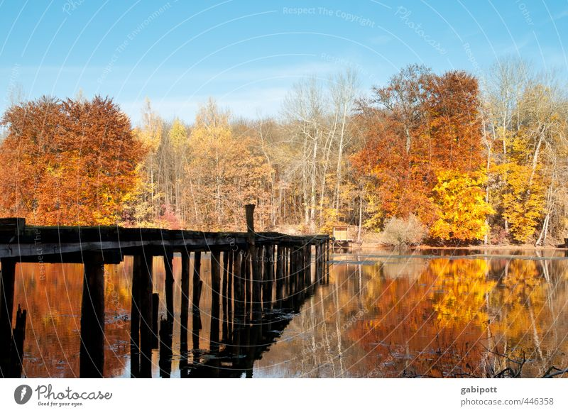 Autumn comes Environment Landscape Water Sky Sun Beautiful weather Tree Forest Lakeside Blue Brown Yellow Gold Idyll Joie de vivre (Vitality) Transience Change