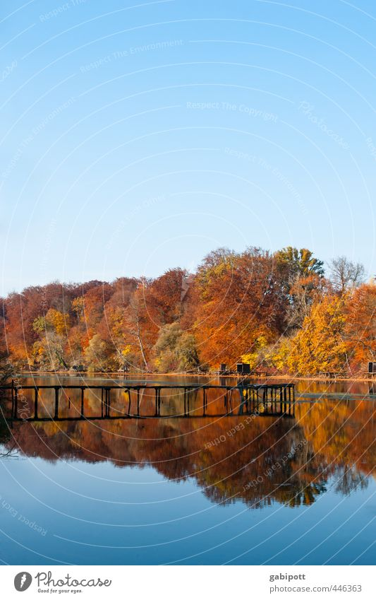 Colourful Environment Nature Landscape Elements Water Sky Cloudless sky Autumn Beautiful weather Tree Forest Coast Lake Fragrance Natural Blue Brown