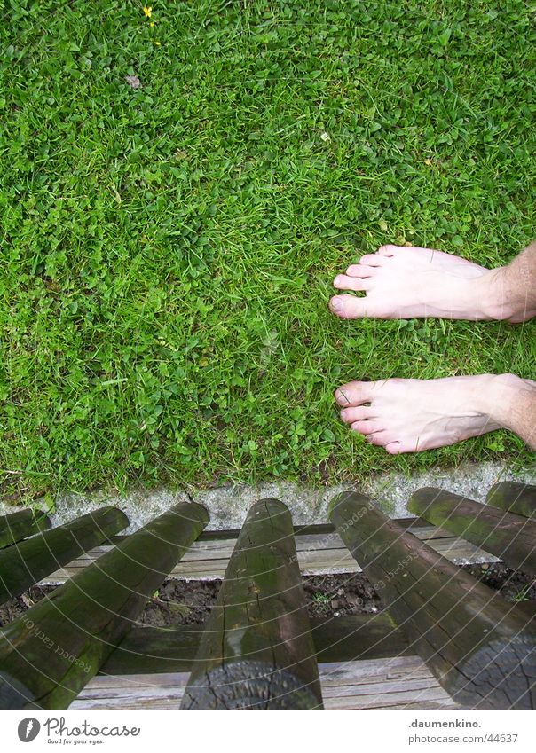 Feet meet grass Grass Meadow Fence Green Brown Hesitate Barefoot Man Leisure and hobbies Lawn Senses Emotions Inspiration To enjoy
