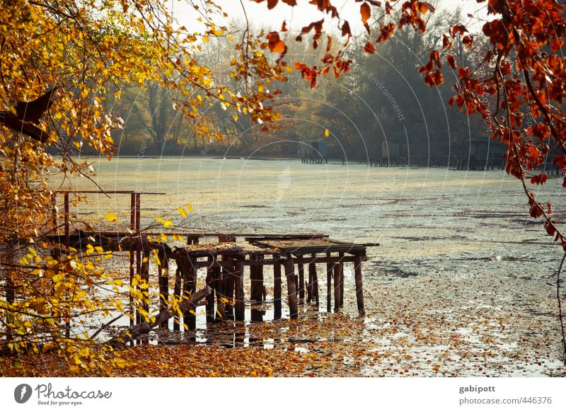 Autumn comes Nature Landscape Weather Beautiful weather Plant Tree Bushes Forest Lakeside River Warmth Brown Yellow Gold Contentment Joie de vivre (Vitality)