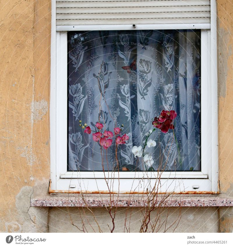 behind Brandenburg windows House (Residential Structure) Facade Window stale Retro piefig Living or residing Old Curtain Orchid Orchid blossom Flower