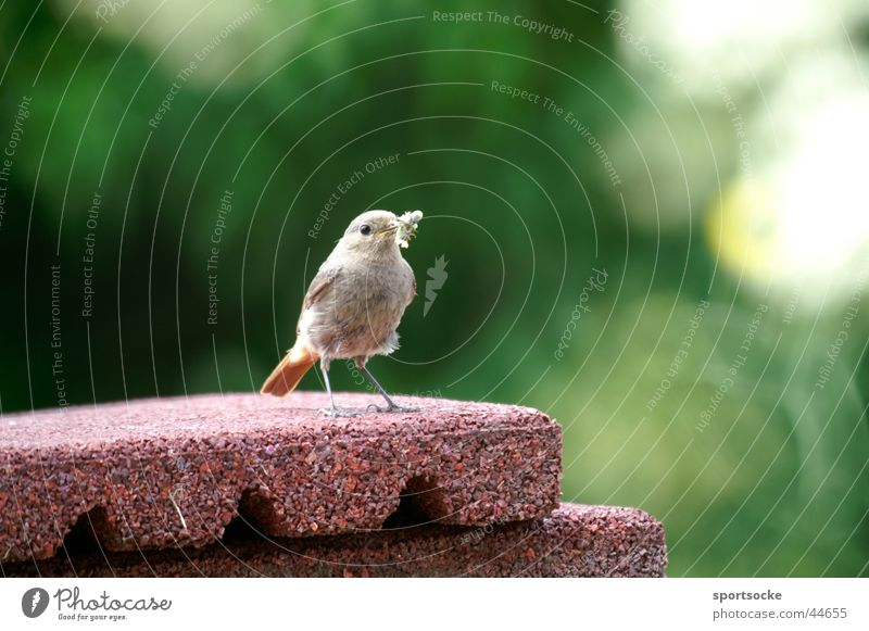 Lonely little bird Loneliness Bird Chirping Posture Seeking a partner Piipmatz