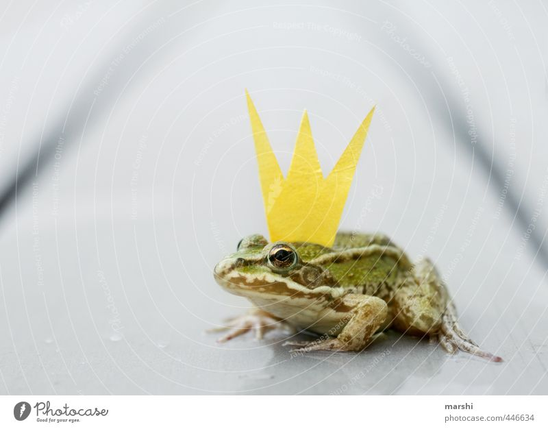 Frog King Animal Wild animal 1 Yellow Gold Green Frog Prince Crown Funny Small Sweet Fairy tale Jinxed Kissing Colour photo Exterior shot Close-up Detail Day