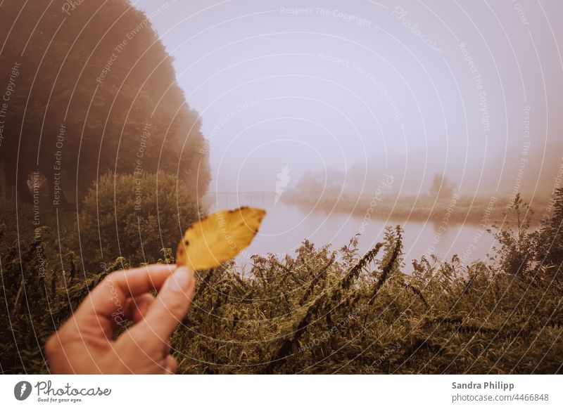 yellow autumn leaf in front of foggy landscape Autumn leaves Fog River Hand Nature Autumnal Autumnal colours Yellow Colour photo Exterior shot Tree Deserted Day