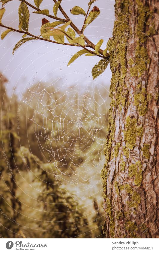 Spider web with dew drops hanging on a tree Spider's web Pattern Wet Damp Fog Drops of water Nature Dew Close-up Exterior shot Macro (Extreme close-up) Net