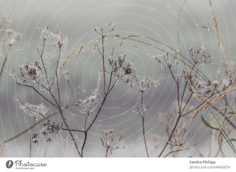 Many small spider webs surround grasses in the rain Cobwebs Drops of water Fog Autumn Water Spider's web Plant Wet Dew Morning Deserted Exterior shot Nature