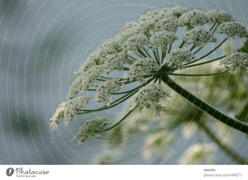 Nature Water Flower Plant Calm Colour Blossom Lake Landscape Coast Art