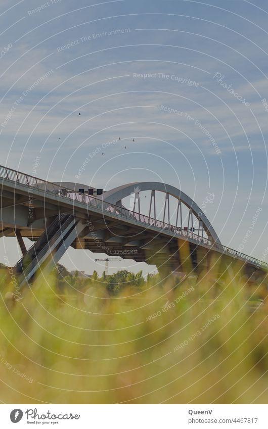 Waldschlößchen Bridge in Dresden waldschlösschen bridge Elbe Architecture Town Saxony Elbufer Vacation & Travel Travel photography City trip Tourism Transport
