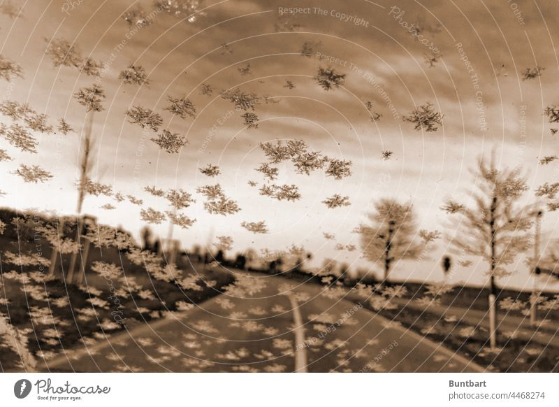 View through a car window embellished with ice crystals onto a wintry avenue with still young trees whose branches are covered in white Winter Ice crystal Cold