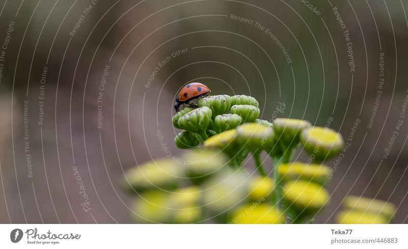 the long journey #1 Environment Nature Landscape Plant Animal Flower Farm animal Beetle Serene Patient Calm Ladybird Colour photo Subdued colour Detail
