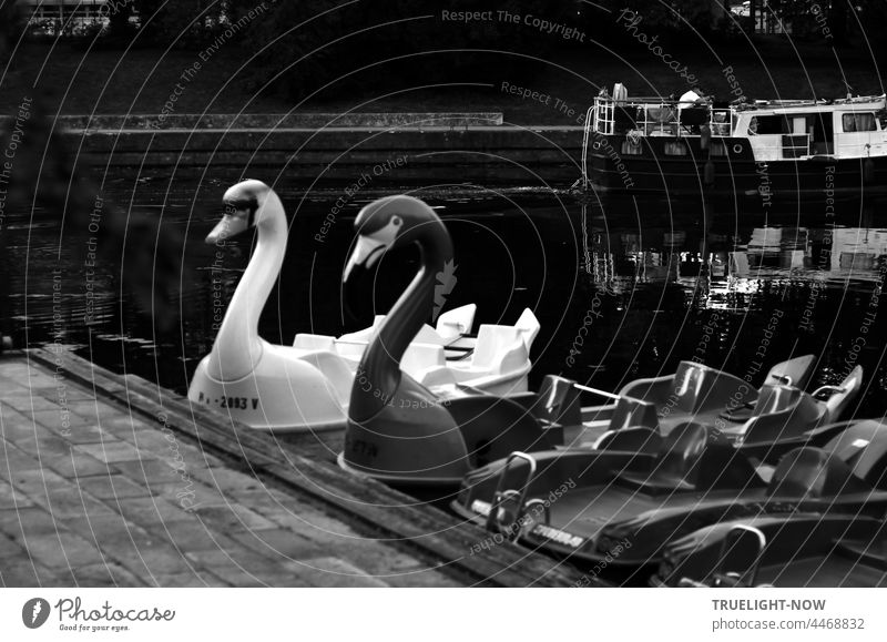 A black and a white swan, which children like to use as a punt; they wait patiently at the quay, for it is evening. A motorboat, however, that just chugs by