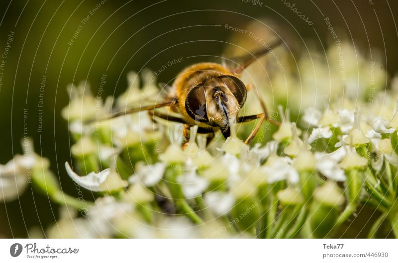 Nature Plant Animal Fly Delicious Hover fly