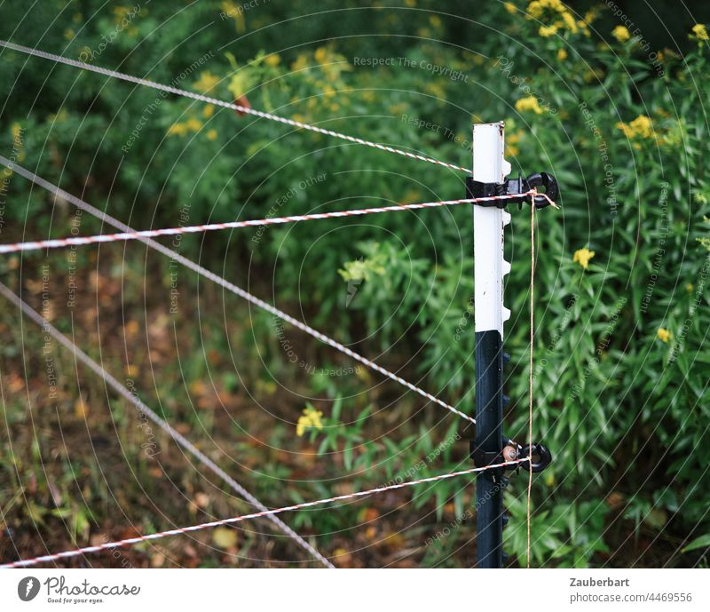 Electric pasture fence with post at the corner forms boundary, lines and geometric shapes Fence Pasture fence Electrified fence Corner stake Pole corner posts