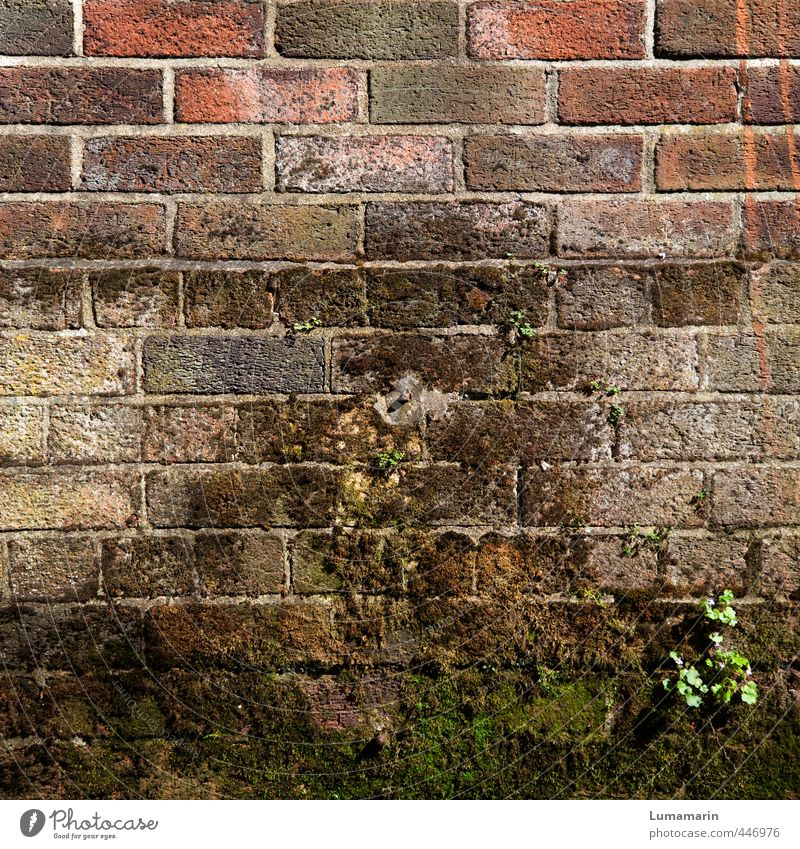 Old Plant Far-off places Wall (building) Wall (barrier) Architecture Brown Facade Living or residing Stand Growth Tall Closed Simple Protection Culture