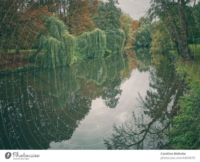 Mystical tree landscape reflected in the water Tree trees Landscape Water River Nature Forest Environment Green Exterior shot Colour photo Day Deserted Plant